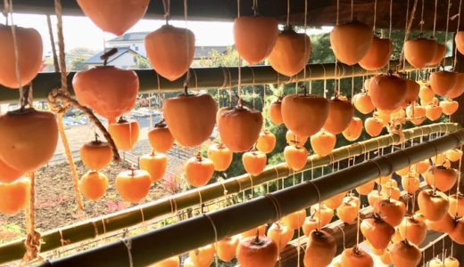 山梨県甲州市塩山-甘草屋敷・ころ柿のカーテン