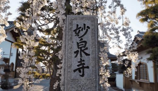 妙泉寺(山梨県中央市)のしだれ桜にキュン!桜のシャワーを観に行こう!