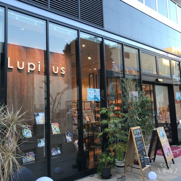 山梨・甲府-Lupinus(ルピナス)