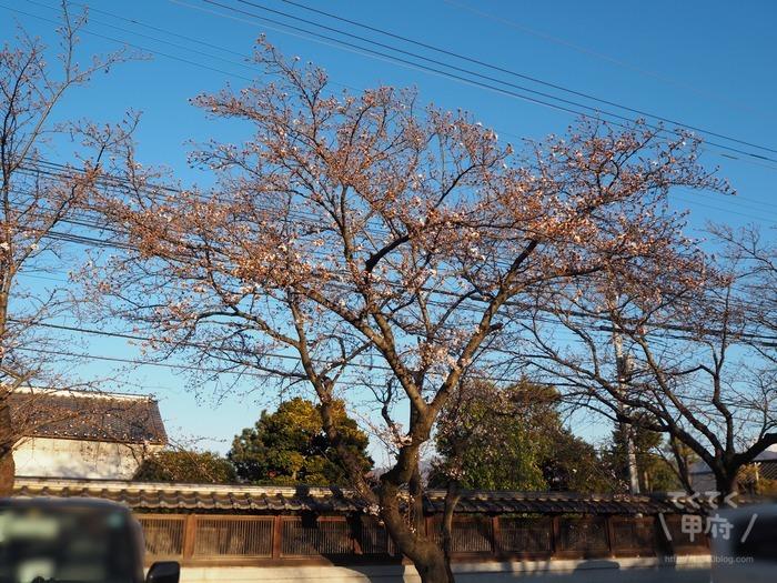 山梨県中央市-妙泉寺のソメイヨシノ