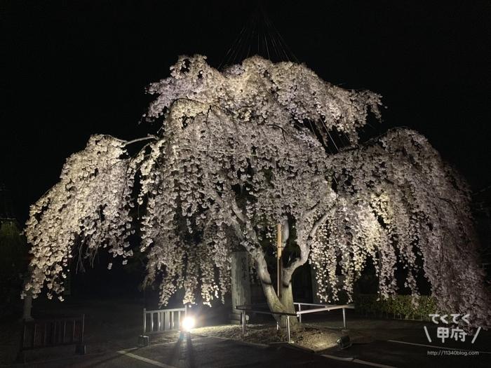 山梨県中央市-妙泉寺のしだれ桜(夜)
