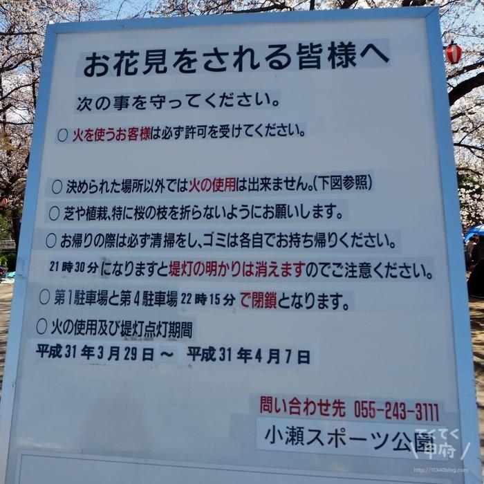 小瀬スポーツ公園桜まつり