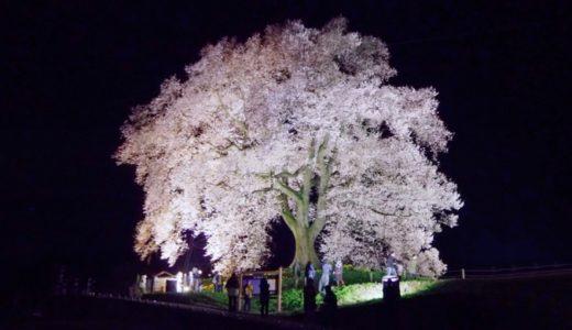 【わに塚のサクラ】山梨県韮崎市、樹齢300年の一本桜を観に行こう