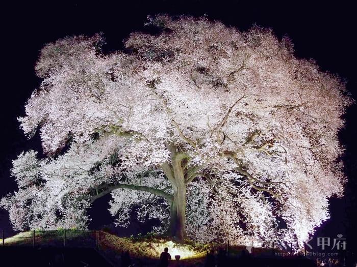 山梨県韮崎市-わに塚の桜(ライトアップされた夜桜)