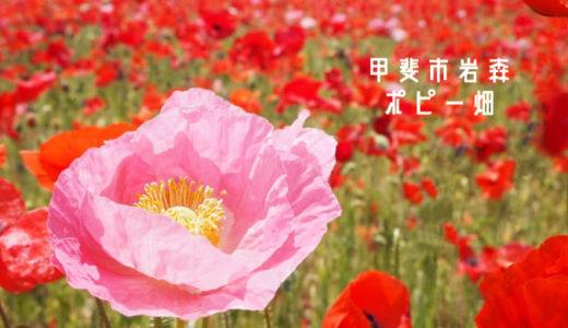 【岩森のポピー畑】甲斐市の絶景!風に揺れる可愛いポピーを観に行こう♡