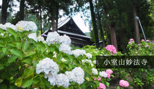 【小室山妙法寺(徳栄山)】山梨・富士川町のあじさい寺で梅雨さんぽをしよう