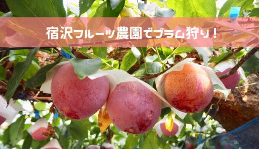 宿沢フルーツ農園でプラム狩り!大玉の貴陽を食べ尽くす♡|山梨県甲州市