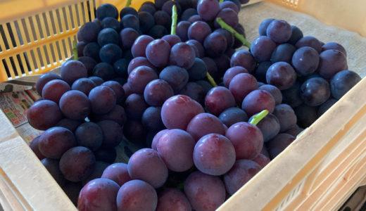【三村ぶどう園】地元で50年支持される、甲府のブドウ直売所