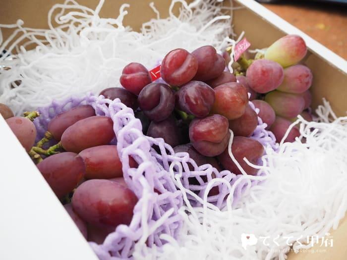 志村葡萄研究所で購入したマドンナの宝石・マイハート・バイオレットキング